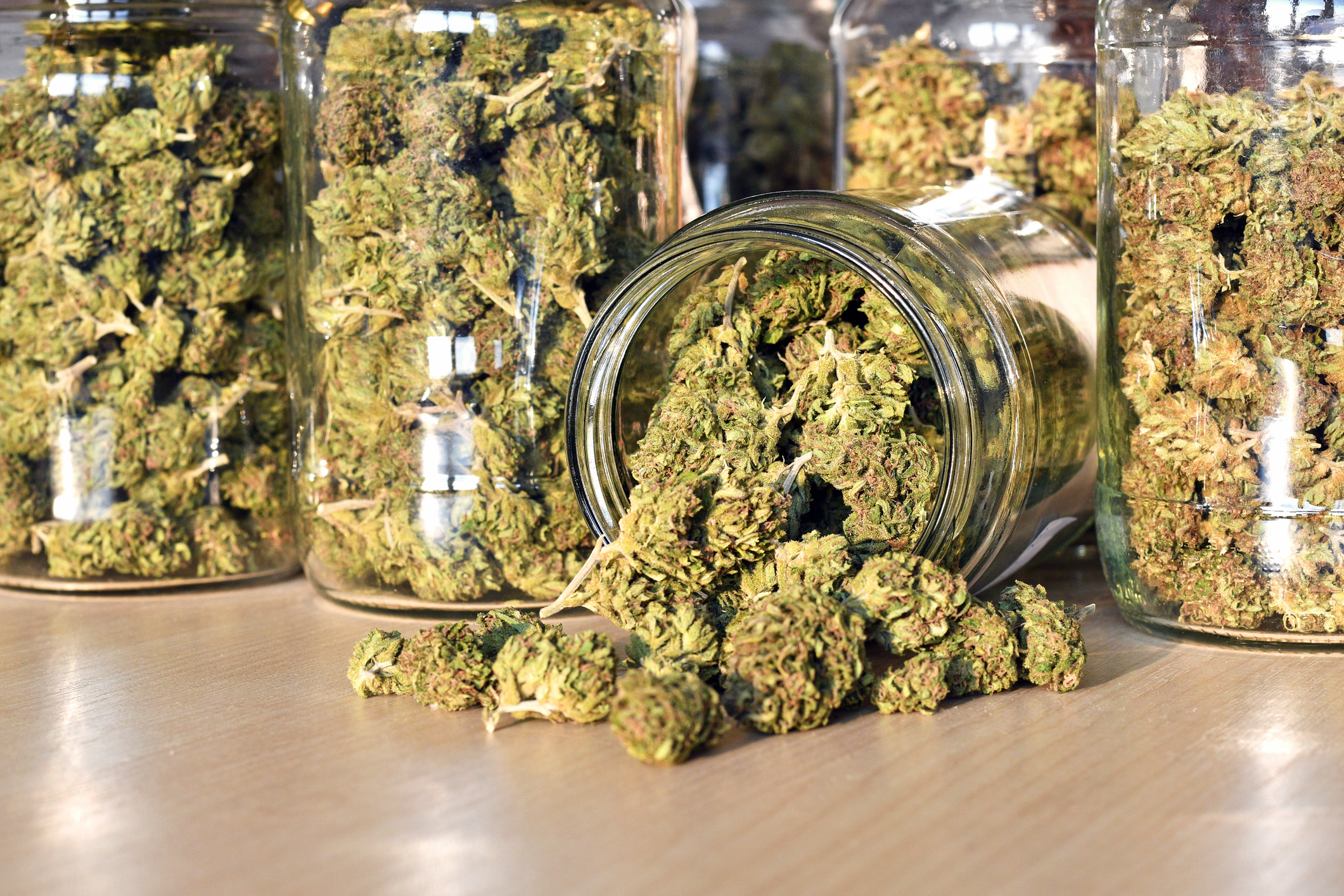 Cannabis farms and your rental homes Central Housing Group